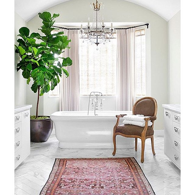bathroom with large fiddle leaf fig via homeheartfengshui kristywicks_burnhamdesign