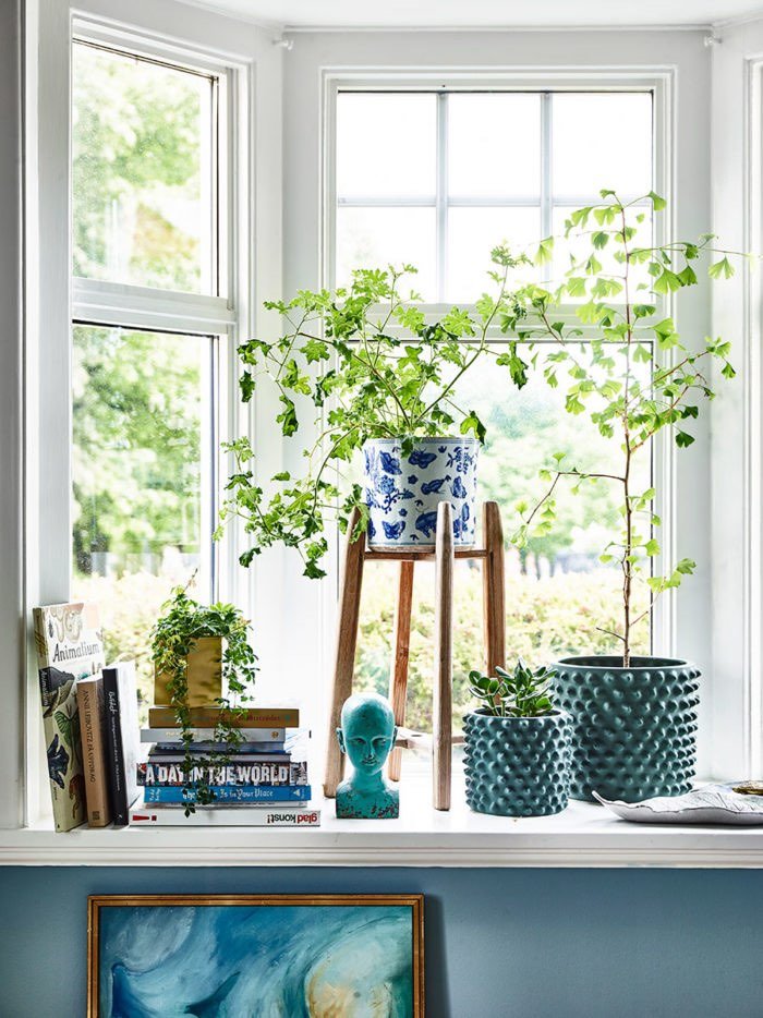 plants in window with books